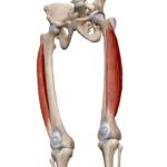 Латеральная широкая мышца